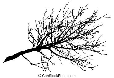 arbre, beau, vecteur, illustration., grand, nu, silhouette., branche