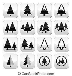 arbre, boutons, ensemble, vecteur, pin