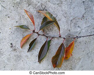 arbre, cerise, feuilles, coloré, automne, branche