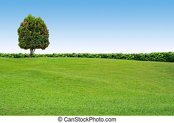 arbre, clair, herbe, ciel