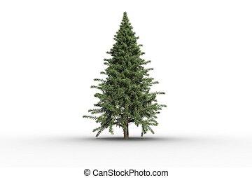 arbre, digitalement, sapin, vert, engendré