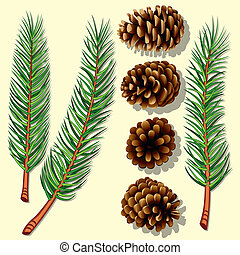arbre diverge, cônes, pin