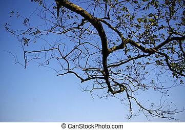 arbre diverge
