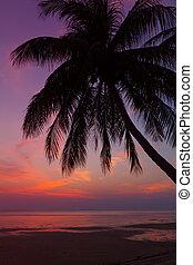 arbre, exotique, paume, thaïlande, plage, coucher soleil