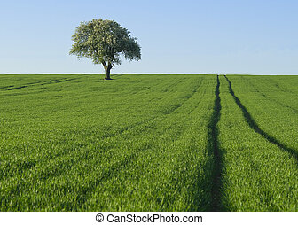 arbre, isolé