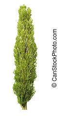 arbre, long