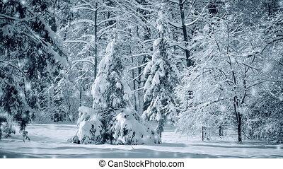 arbre, magique, fantastique, vue, forêt parc, noël, paysage, conte fées
