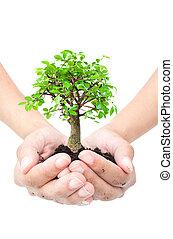 arbre, mains