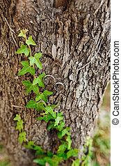 arbre, mariage, bark., anneaux, coffre, lierre, or, enroulement, long