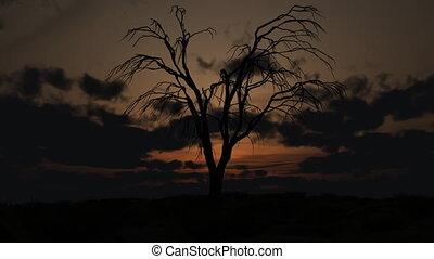 arbre, mort