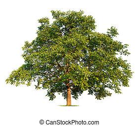 arbre, noix