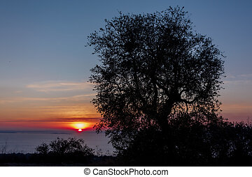 arbre, olive, coucher soleil