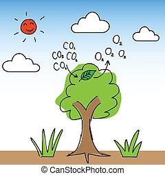 arbre, oxygène