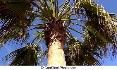 arbre, paume, jour ensoleillé, vent
