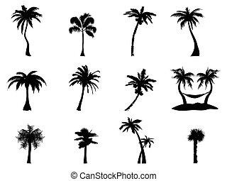 arbre, paume, silhouette