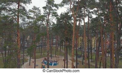 arbre pin, parc