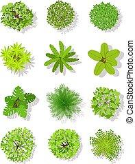 arbre., planter, éléments, jardin, sommet, isolé, arbres, vecteur, conception, plan, bushes., feuilles, paysage, vue