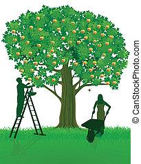 arbre, récolte, pomme