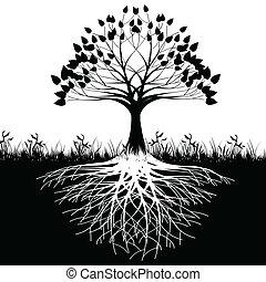 arbre, racines, silhouette