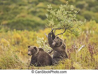 arbre saule, petits, ours, jouer