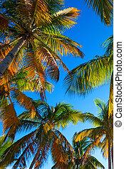 arbre tropical, plage paume