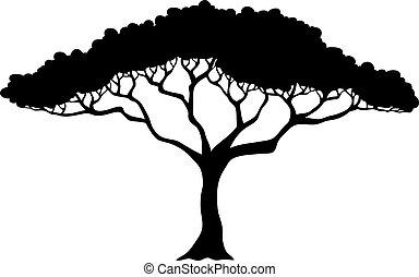 arbre tropical, silhouette