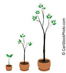 arbre, vecteur, croissance