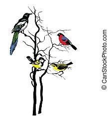 arbre, vecteur, silhouette, oiseaux