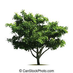 arbre., vecteur, vert