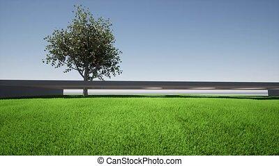 arbre, vert, abricot, herbe, isolé