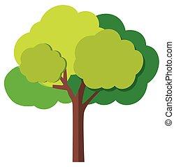 arbre vert, branches