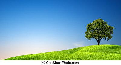 arbre vert, coucher soleil