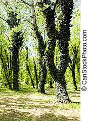 arbre vert, lierre, couvert