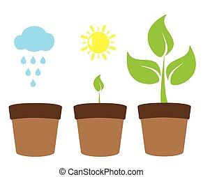 arbre vert, plante