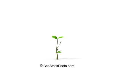 arbre, vert, pousse feuilles, croissant, alpha, hd