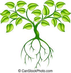arbre vert, racines