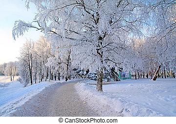 arbre ville, parc