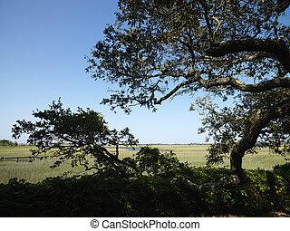 arbre, wetland.