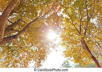 arbres automne, fond