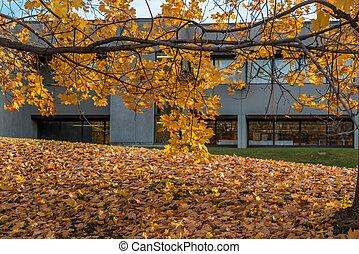 arbres, automne