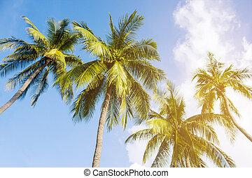 arbres, beau, paume, fond, noix coco, exotique