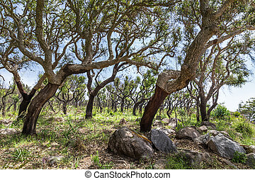 arbres, bouchon, portugal