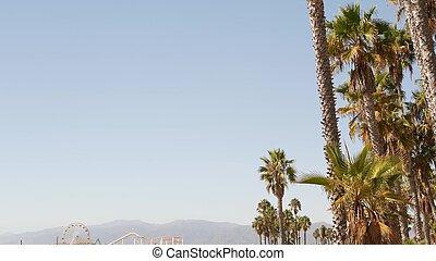 arbres, esthétique, ferris, plage, paume, parc, symbole, océan, ciel, santa, jetée, amusement, iconique, usa, angeles, californie, los, classique, pacifique, ca, roue, resort., vue, espace, monica, copie, été