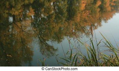 arbres., feuilles, flotteur, surface, refléter, jaune, jaunir, rivière