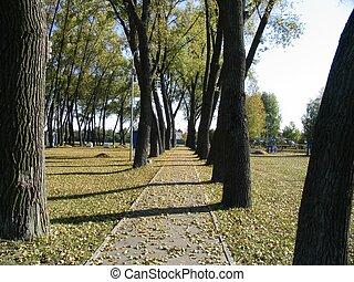 arbres, fond