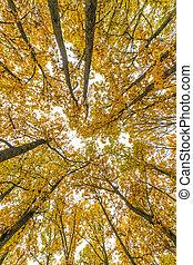 arbres, forêt, automne, haut, regarder