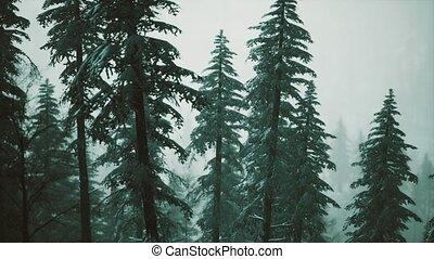 arbres hiver, neige a couvert, flanc montagne, cône