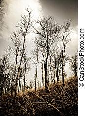 arbres morts, fond