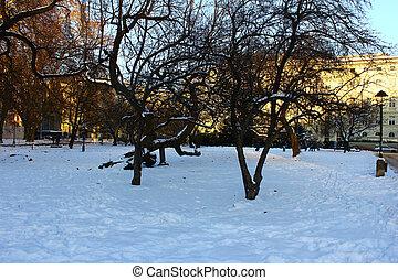 arbres, neige, fond
