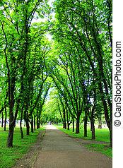 arbres, parc, vert, beaucoup, beau